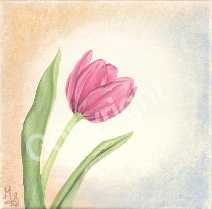 Tulip Medium Pink Premium Matte Paper Giclee Print