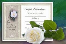 rose and certificate.jpg