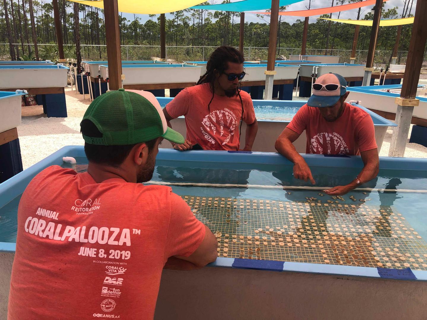 Coralpalooza™_2019_Coral_Vita_075.JPG