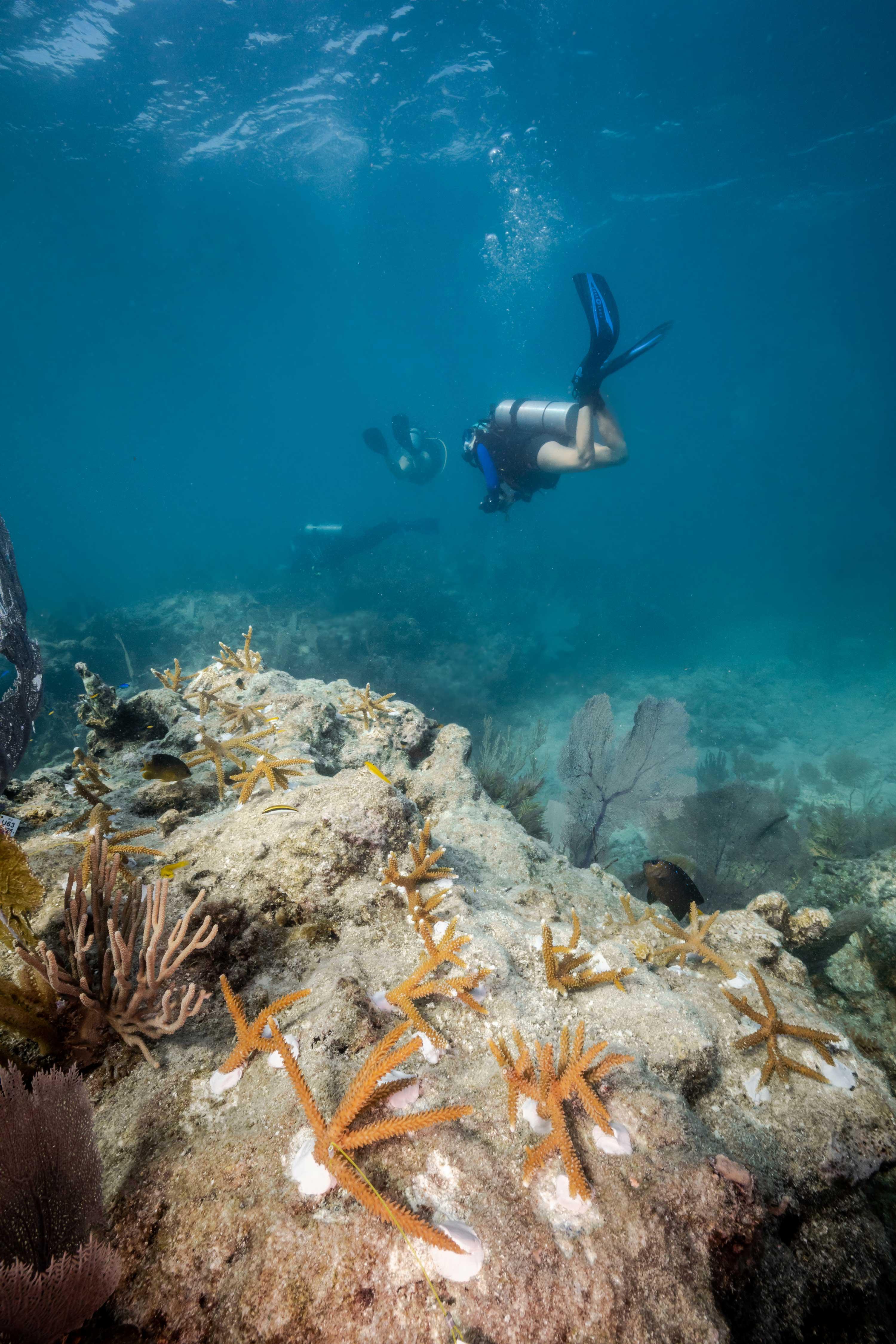 Carysfort Reef111
