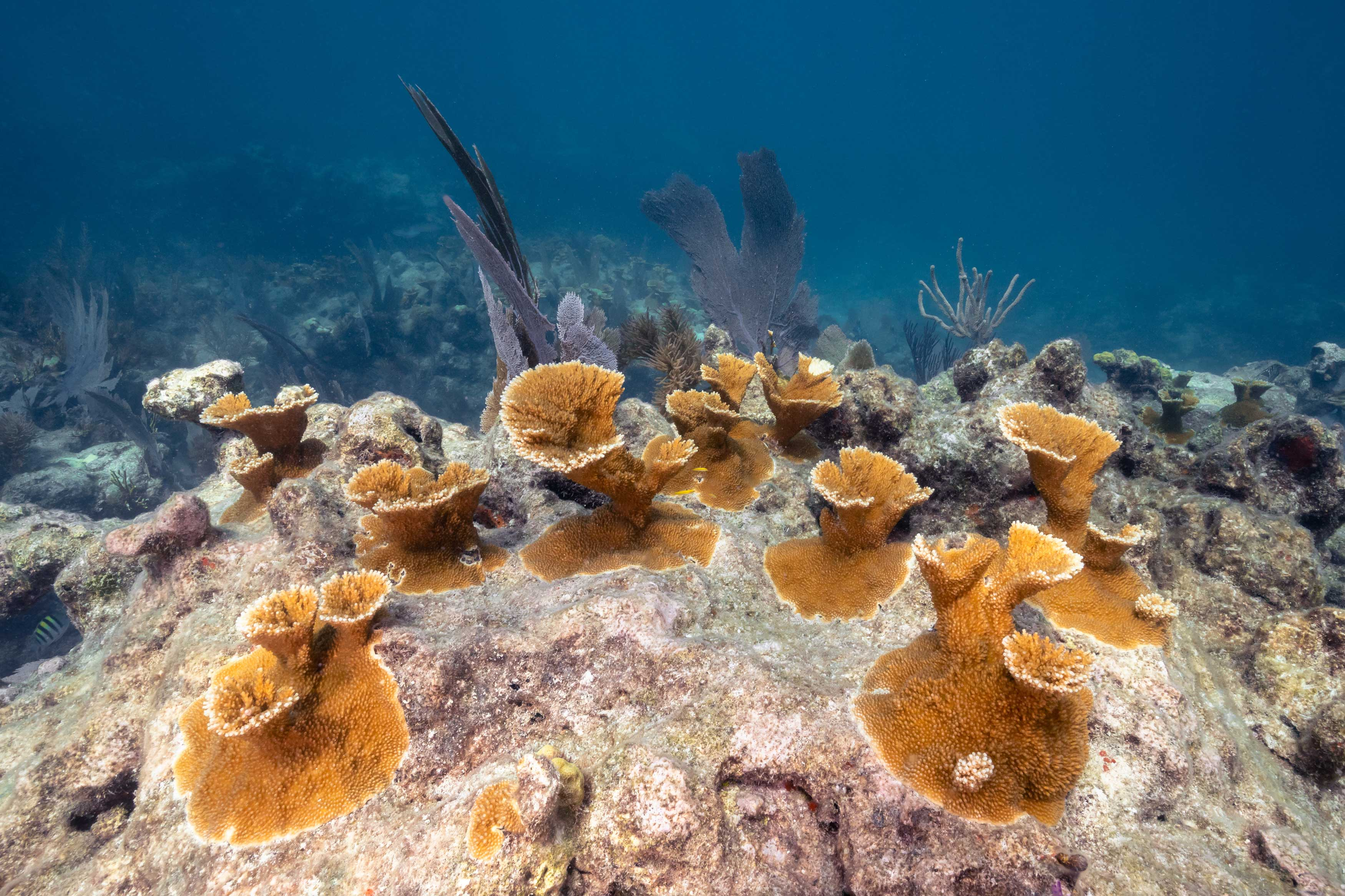 Carysfort Reef105