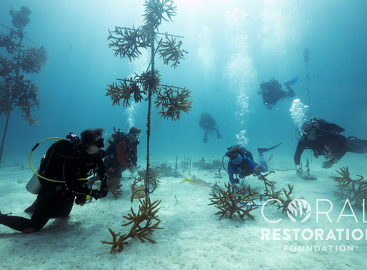 NEW RESEARCH TRACKS TIMING OF CORAL SPAWNING ON FLORIDA'S CORAL REEF