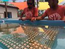 Coralpalooza™_2019_Coral_Vita_076.JPG