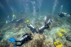 Coralpalooza™_2019_Alexander_Neufeld--Co