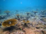 Coralpalooza™_2019_Oceanus_063.JPG