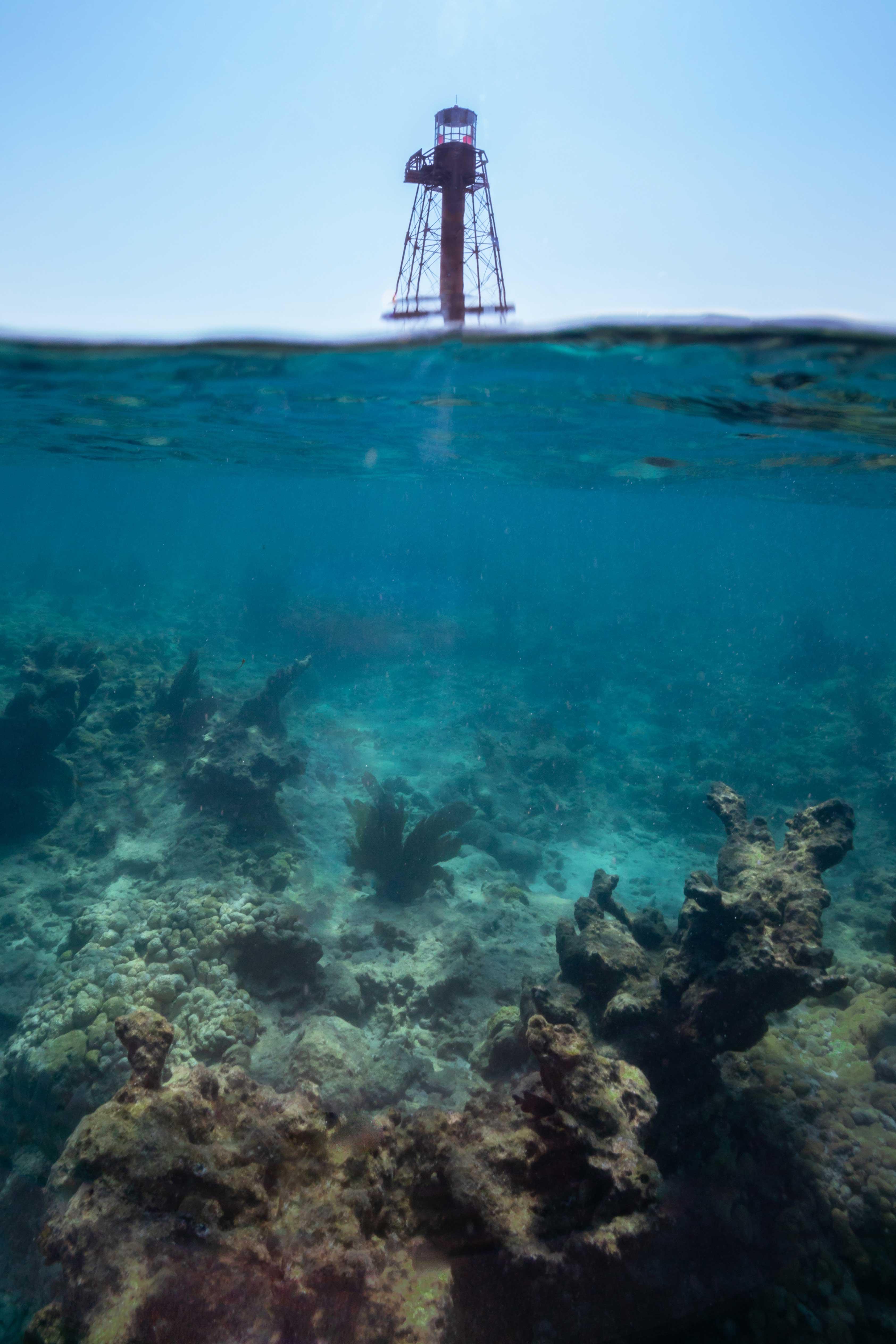 Carysfort Reef109