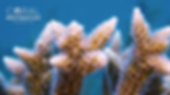 CRF Staghorn Zoom Background.png