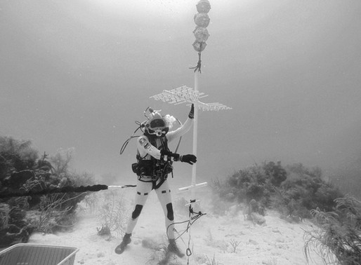 NASA Astronauts Help Restore Coral Reefs while Training for Missions to the Moon and Mars
