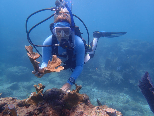 Coral Restoration Site Hit by Boat Anchor