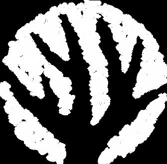 Coralpalooza.Logo.White 2018.png