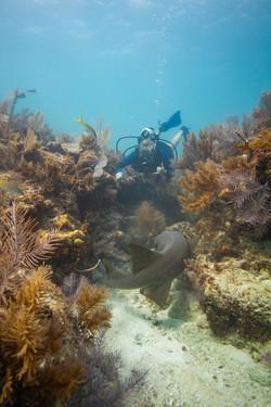 1012 Boulder Coral OP (11 of 15)