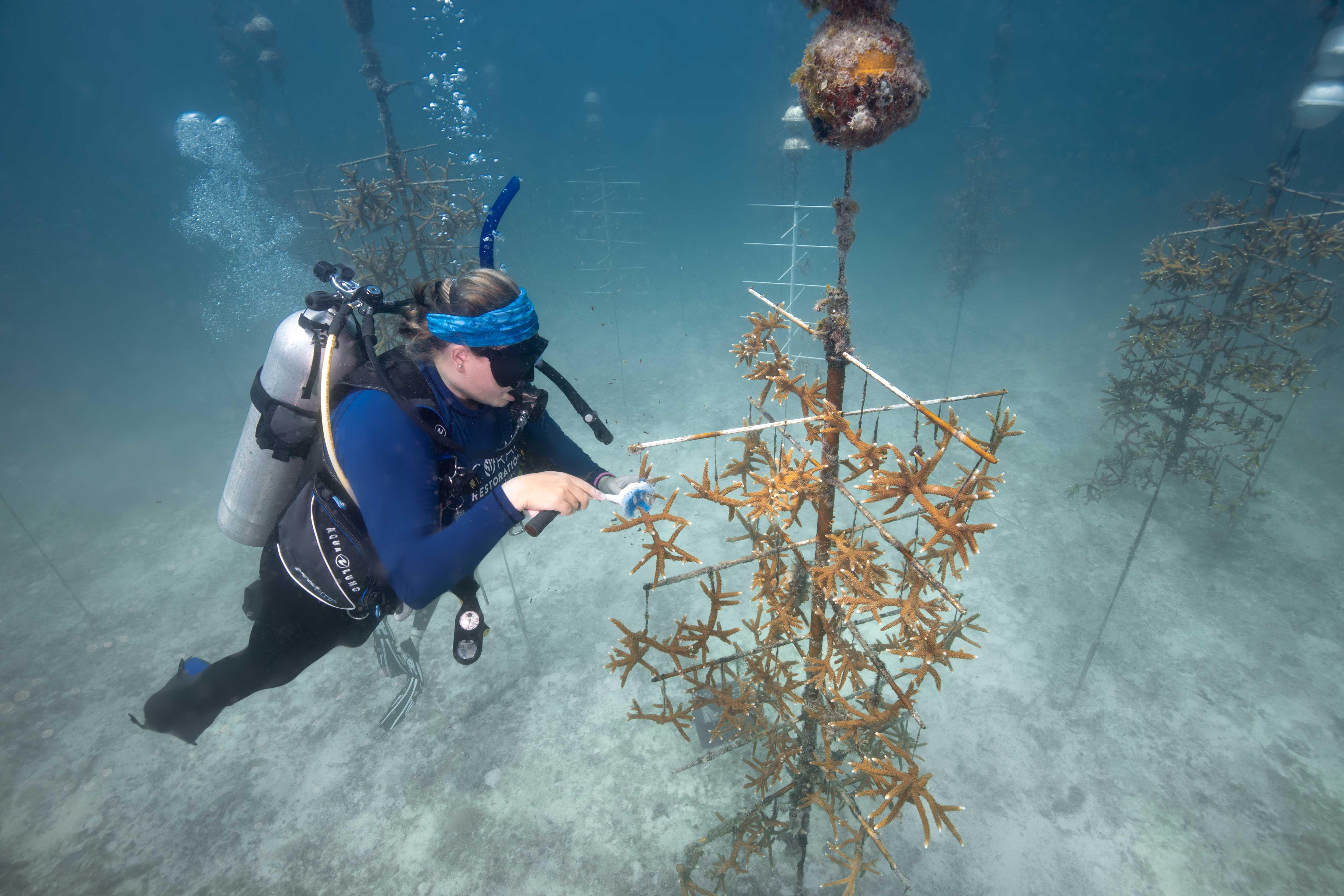 Carysfort Reef104