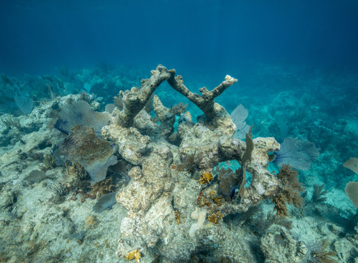 One action you can take NOW to save our coral reefs