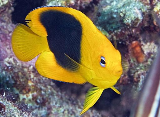 Coral Tree™ Nurseries are Diverse Habitats!
