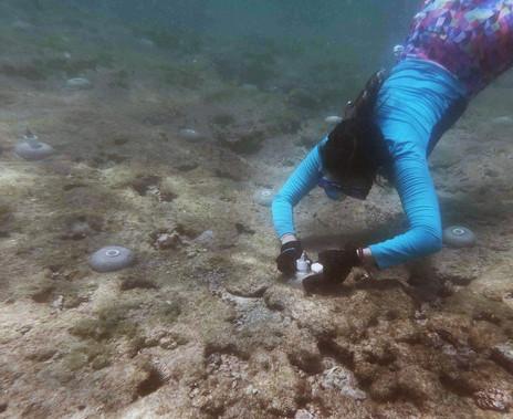Coralpalooza™_2019_Oceanus_060.JPG
