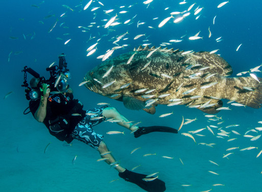 Dietrich Clothing Captures a Hopeful Future for our Reefs