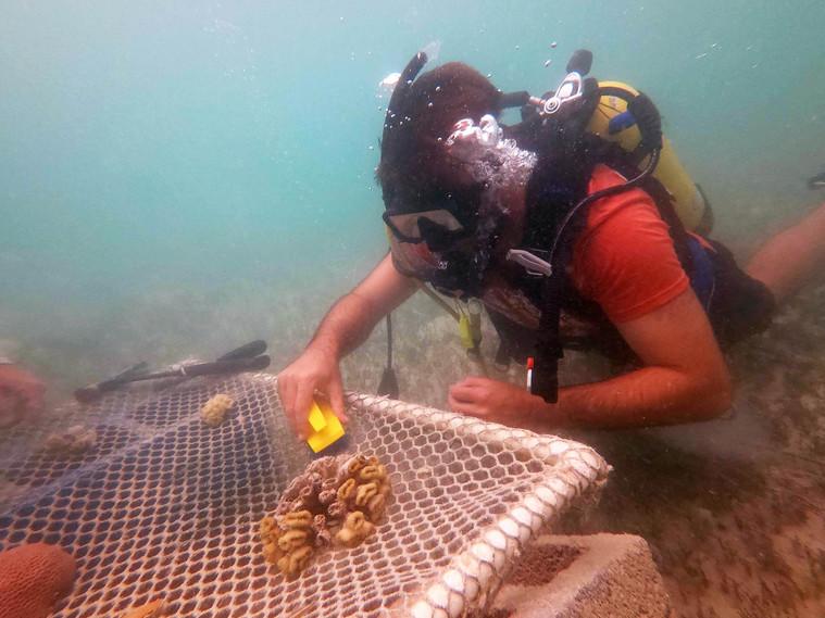 Coralpalooza™_2019_Coral_Vita_079.JPG