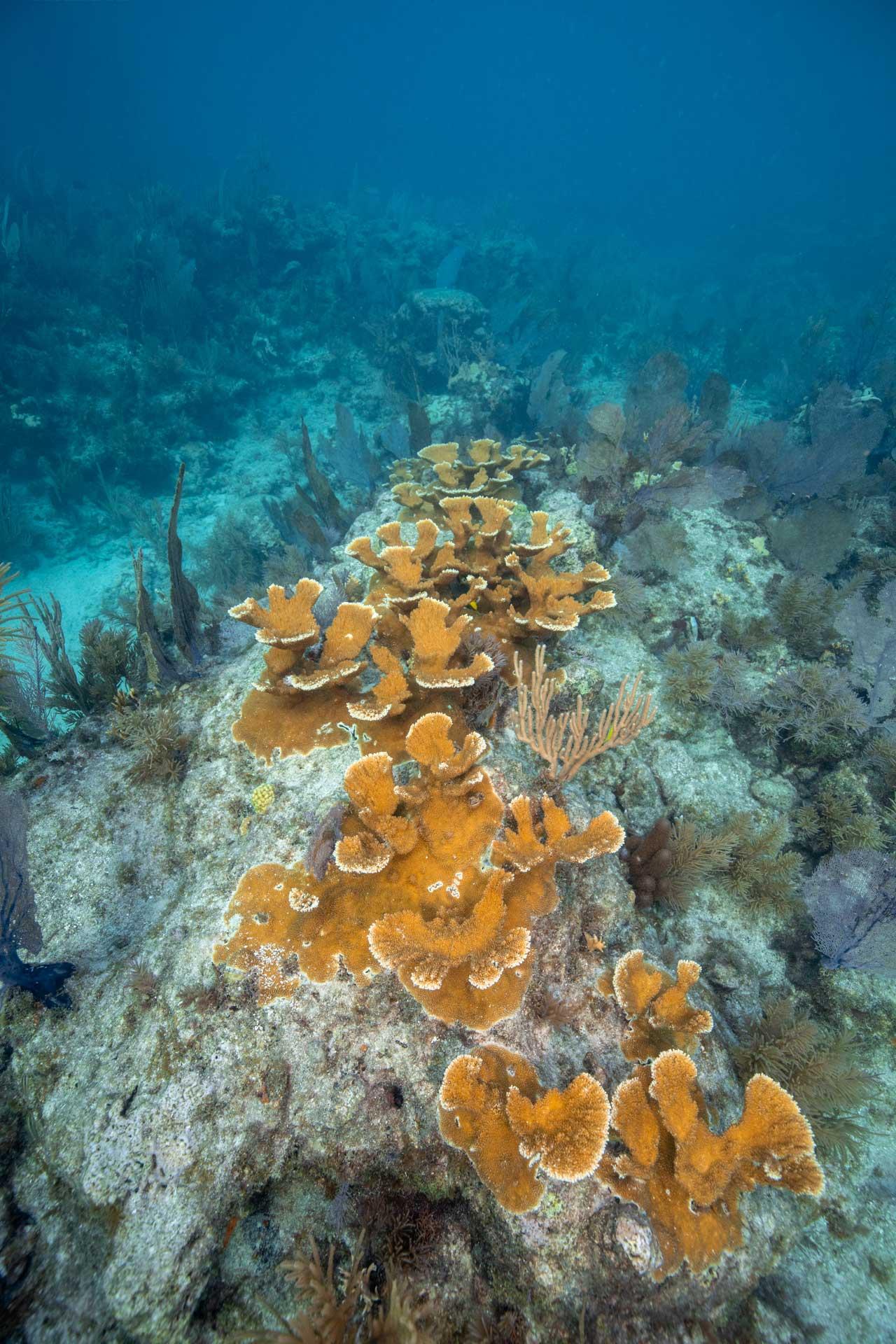 Carysfort Reef107