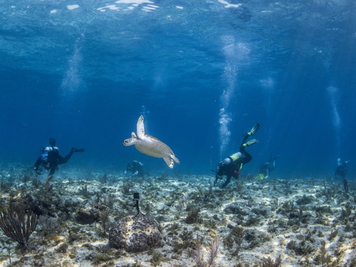 CORAL RESTORATION PROJECT AT EASTERN DRY ROCKS AWARDED $5 MILLION GRANT