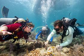 Coralpalooza™_2019_Alexander_Neufeld--