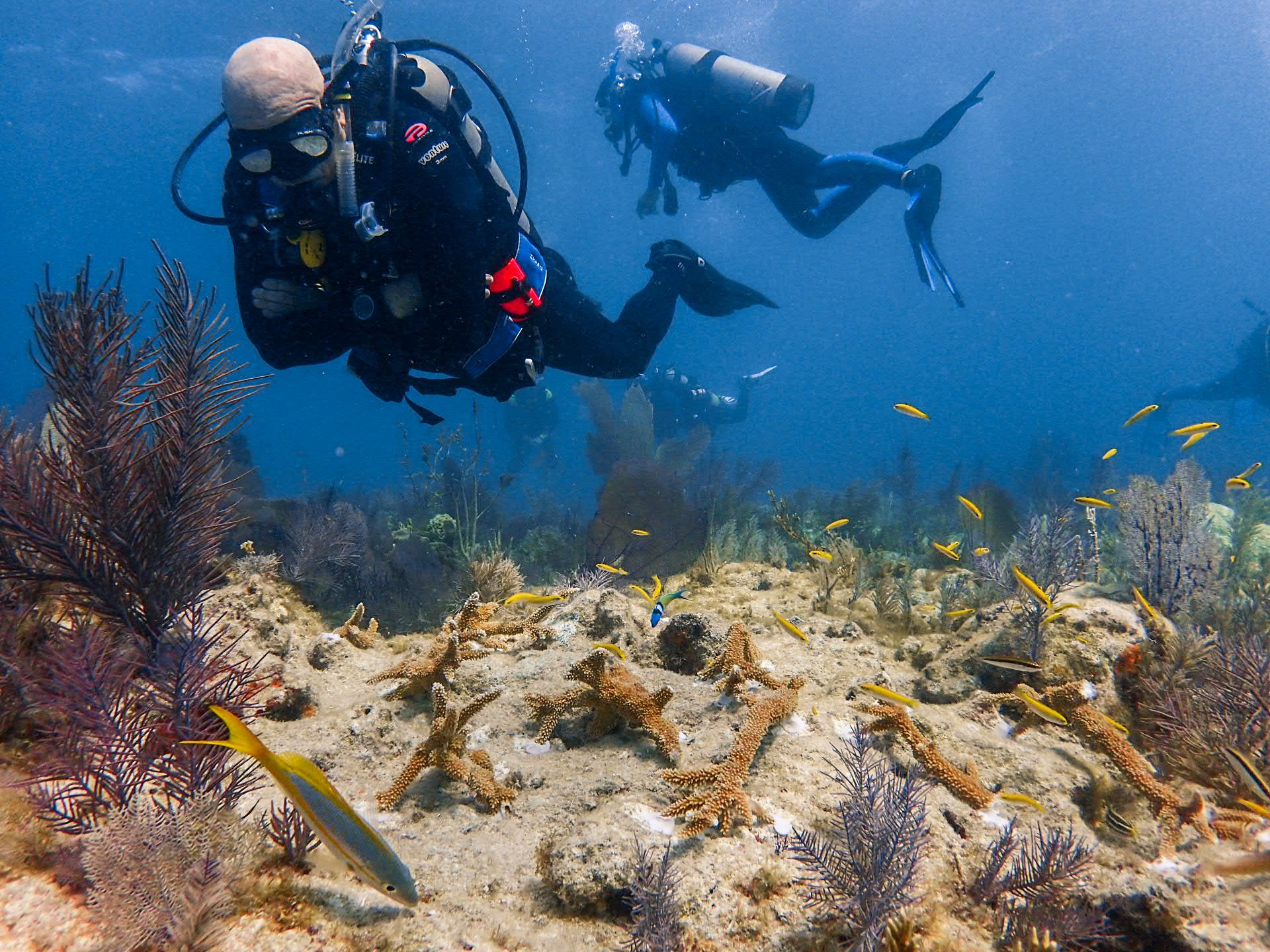 Levene steve. reef-2