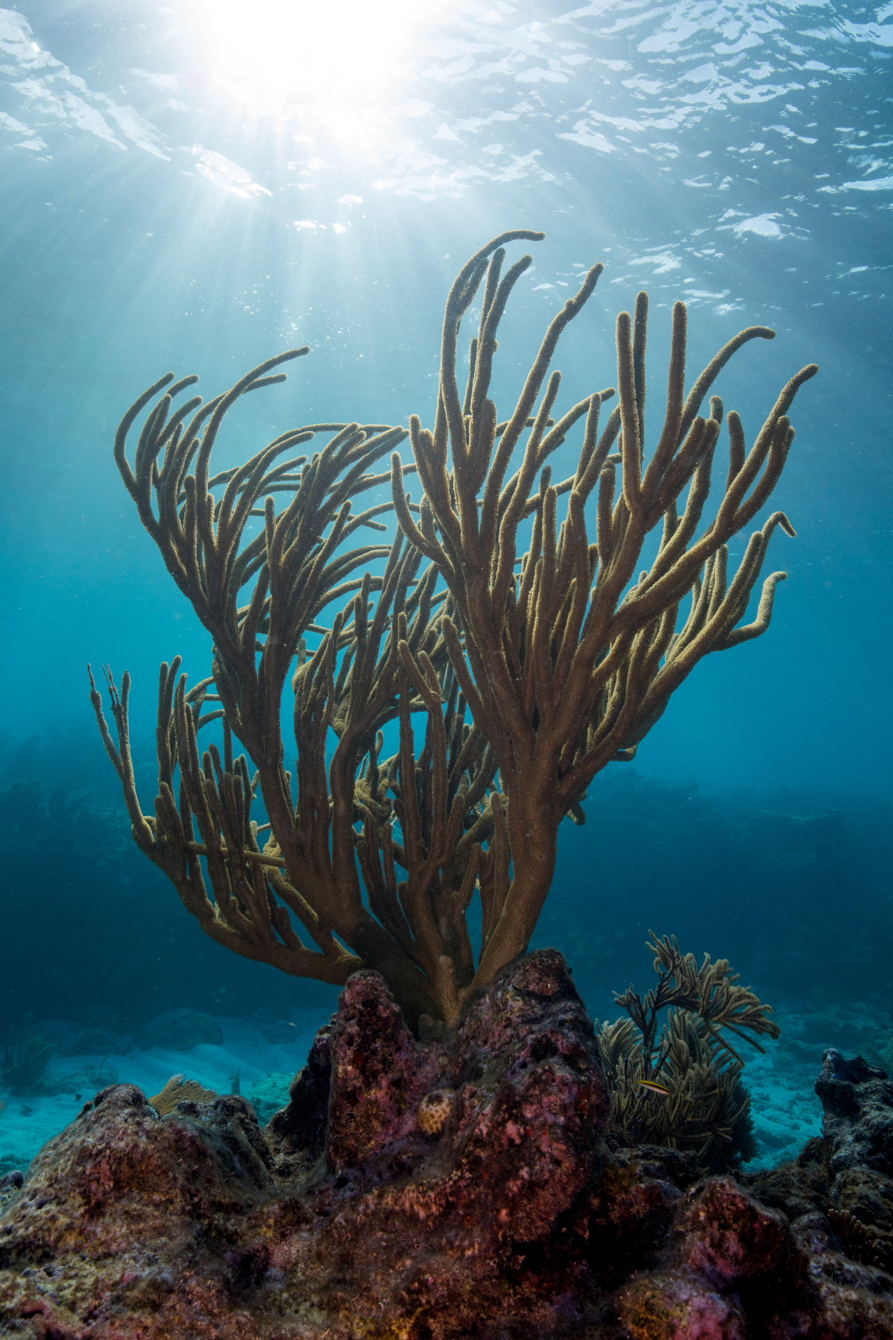 Coral Restoration Foundation | United States