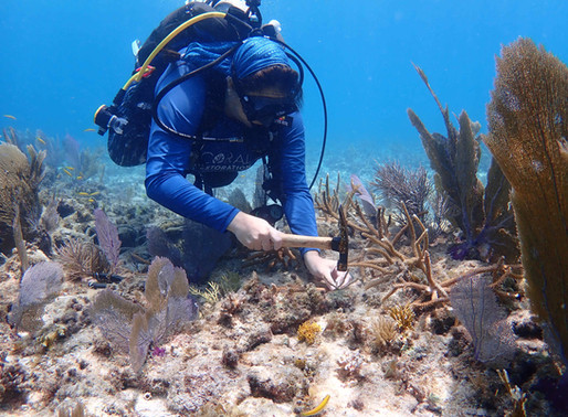 New Techniques are Ramping up Reef Restoration in the Florida Keys