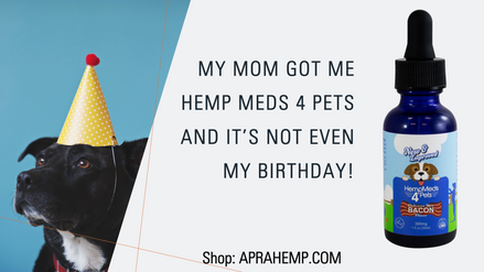 Yes We Make CBD for Pets!