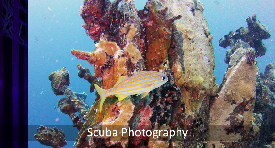 Scuba Photography