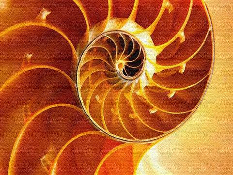sea-shell-wallpaper-44[1].jpg