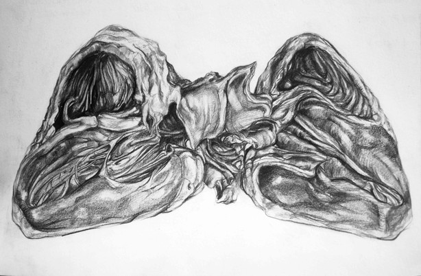 Life drawing after an open pig's heart - 2018