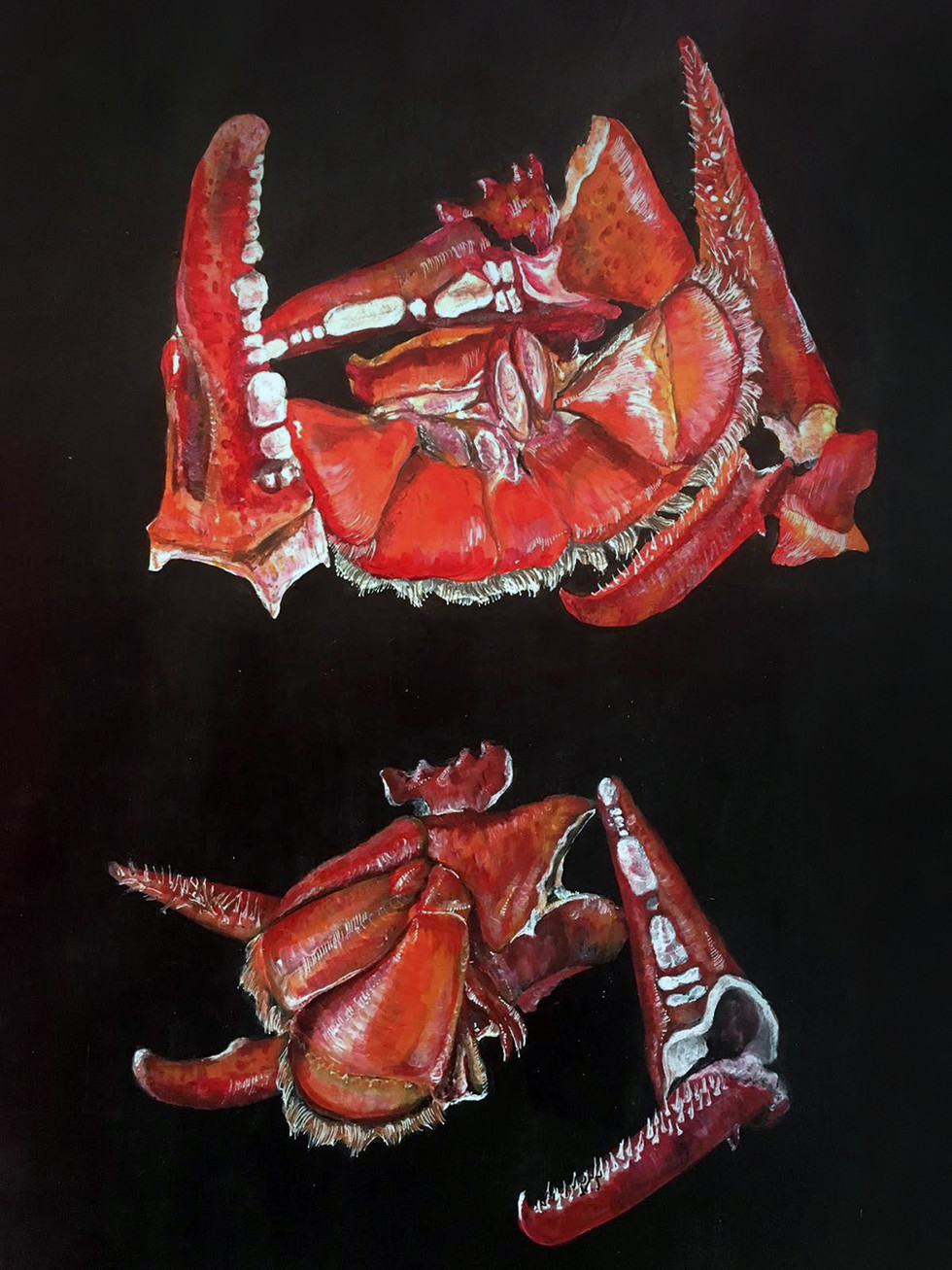 Deconstructed Lobster - 2018