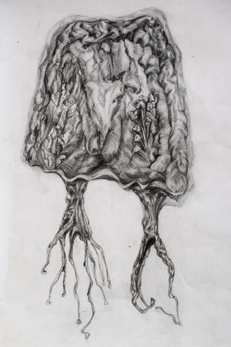 The unconscious' jellyfish - 2017