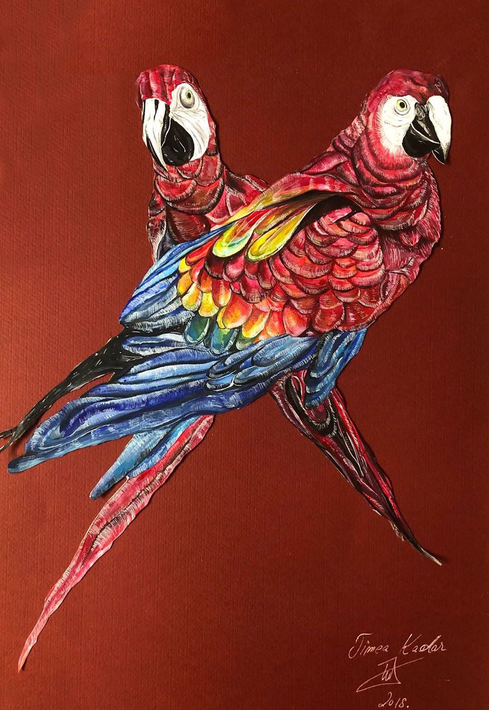 Birds of Summer - 2018