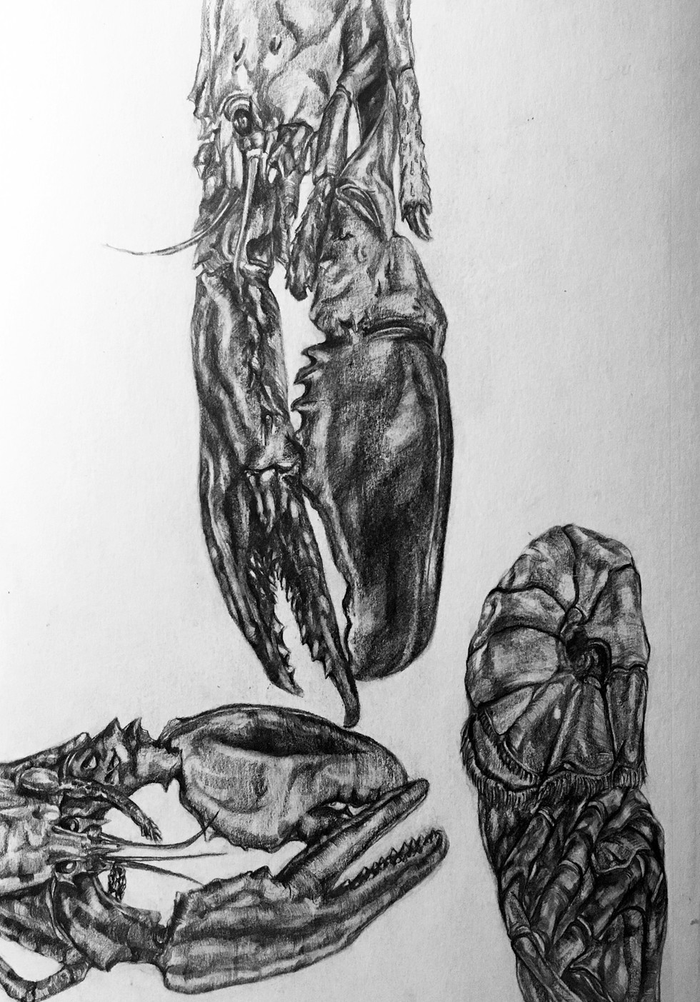 Life drawing after a lobster - 2017
