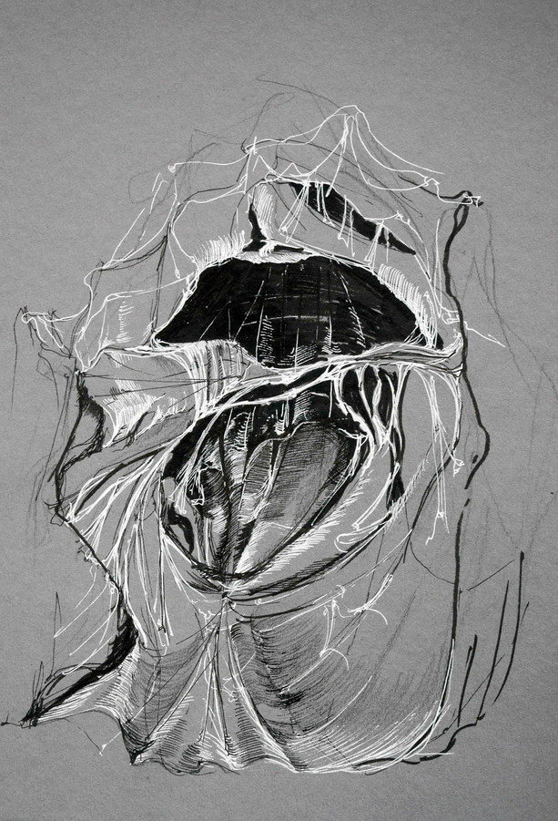 Sketch of the right atrium of a pig's heart (life drawing) - 2018