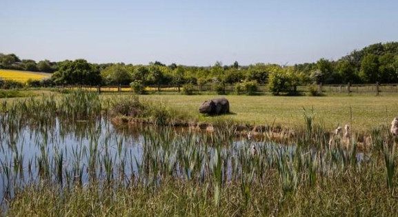 View of the meadow and hippo _ Whitensme