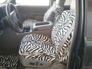 zebrafront.jpg