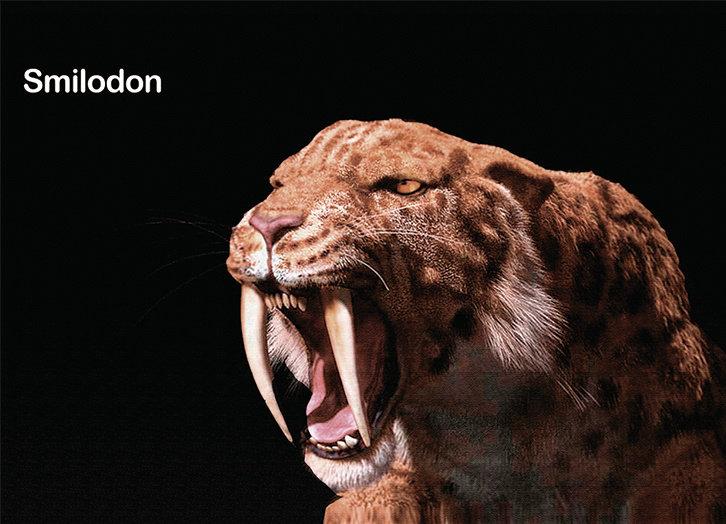 Smilodon iman
