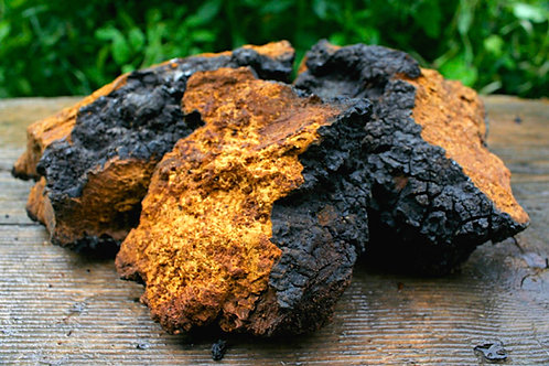 Ground Wild Michigan Chaga Mushroom