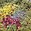 Thumbnail: Rambin' Rose Herbal Smoking Blend