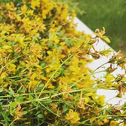 FREE CLASS! Herbs to Help with Overcomin