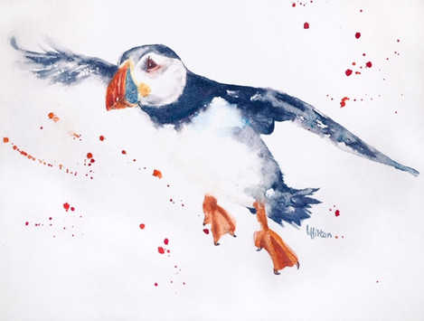 Puffin Diving