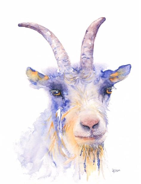 Lavender Goat