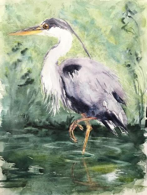 Sue's Heron