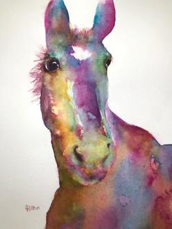 Horse Pinks
