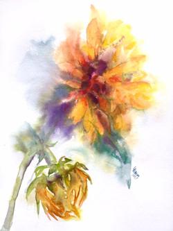 Sunflower and Bud