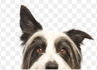 kisspng-dog-training-pet-sitting-puppy-o
