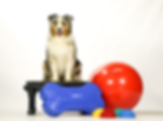 Canine-Gym-in-a-Box-670x493.png