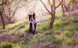 itl.cat_spring-images-wallpaper_2160197.
